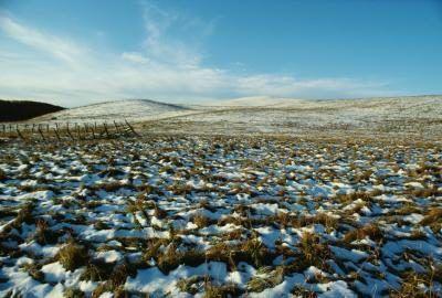 A neve cobriu Tundra.
