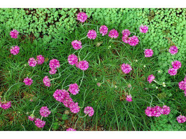 Em um jardim feito de preenchimento, criar boas canteiros para obter melhores resultados.