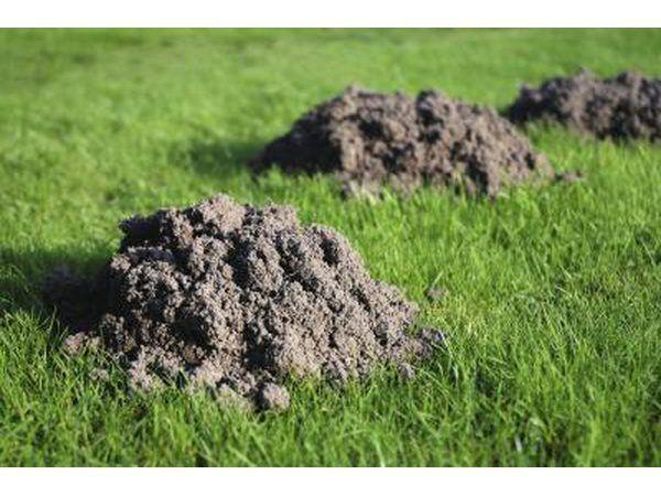 Três montículos na grama.