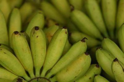 Bananas são frutas tropicais comuns apreciado pela maioria.