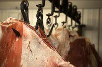 motoristas de gado caminhão garantir que o gado chegar ao seu destino.