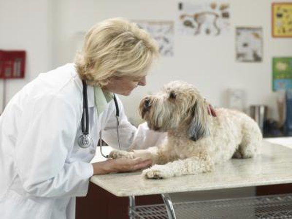 Trilostane é usado para tratar cães.