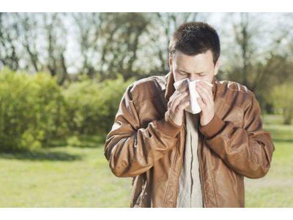 alergias Cottonwood pode produzir sintomas de febre do feno.
