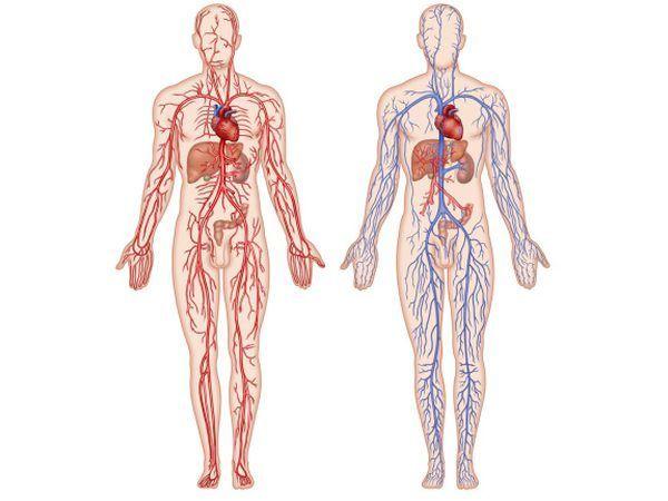 médicos vasculares ajudar os pacientes com uma grande variedade de doenças que afetam as artérias e veias, com exceção das condições que afetam o coração ou o cérebro.