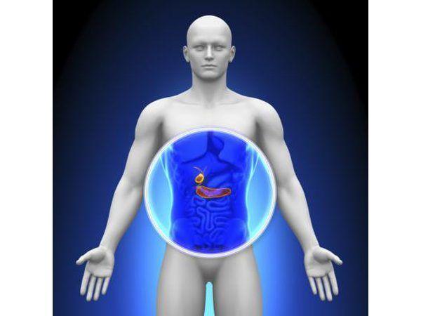 Ilustração 3D destacando o pâncreas.